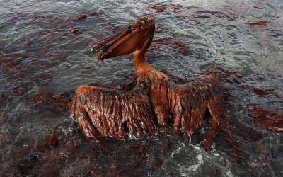 Ten years later, BP oil spill continues to harm wildlife—especially dolphins