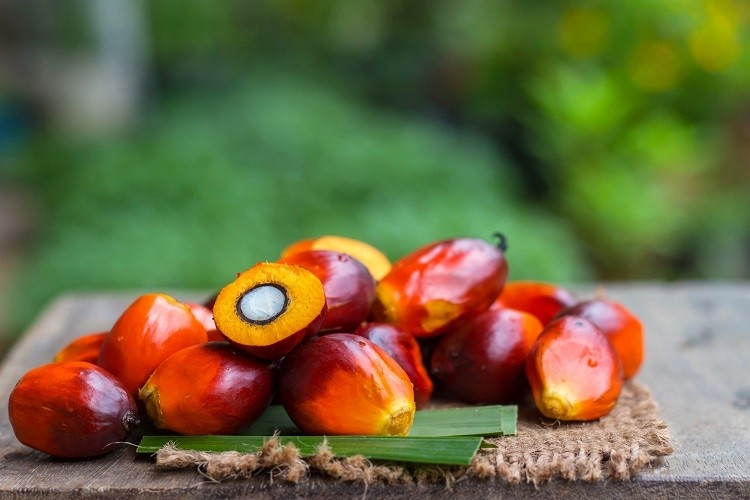 DuPont claims 'industry leading example' for sustainable palm oil: 'We can help to reduce the negative impacts of palm oil'